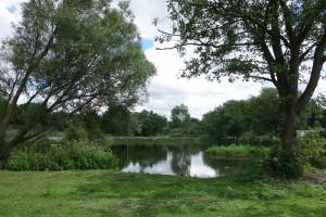 Ashford Lake (1)